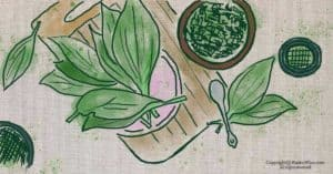 How to Prepare Plantain Leaves for Medicinal Uses