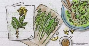 Cooking with Dandelions: How to Forage + 2 Ways to Improve the Taste of Dandelion Greens