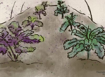 Growing Kale in Winter: Making the Most of this Cold-Hardy Vegetable