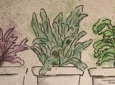 Growing Kale in Containers Indoors: A Step-by-Step Guide