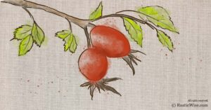 When to Harvest Rosehips and Easy Ways to Prepare Them