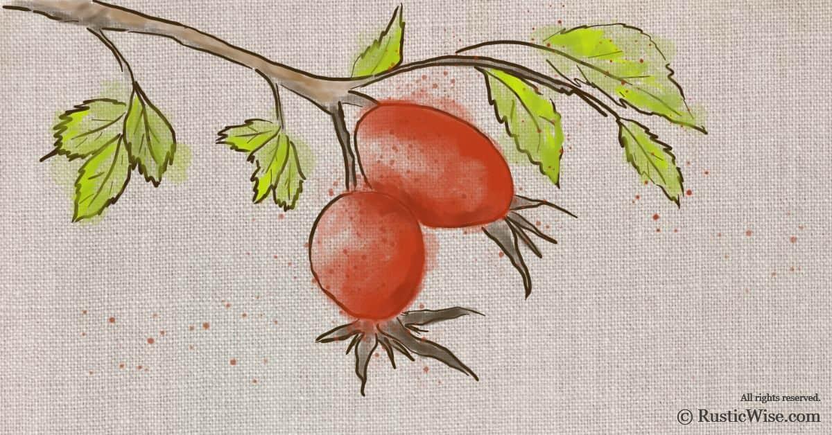 RusticWise_Rosehip-Harvesting