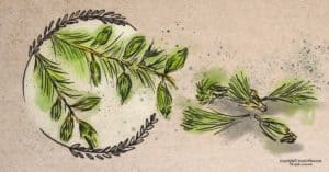 Are Spruce Tips Edible? How to Identify, Forage, and Use this Evergreen
