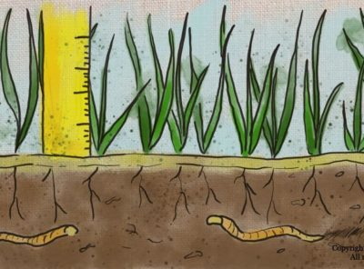When Do You Cut New Grass and 6 Spring Lawncare Tips
