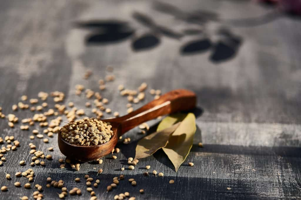 Unsplash_CorianderShelfLife-seeds
