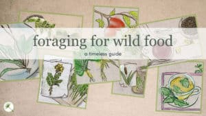 A Timeless Guide To Foraging for Wild Food
