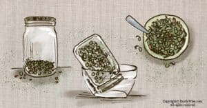 How To Grow Lentil Sprouts: Quick and Tasty