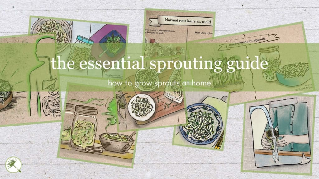 RusticWise.com Sprouting Guide