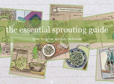 The Essential Sprouting Guide: How To Grow Sprouts at Home