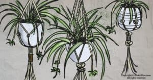 Everything You Need To Know About Spider Plant Care Indoors