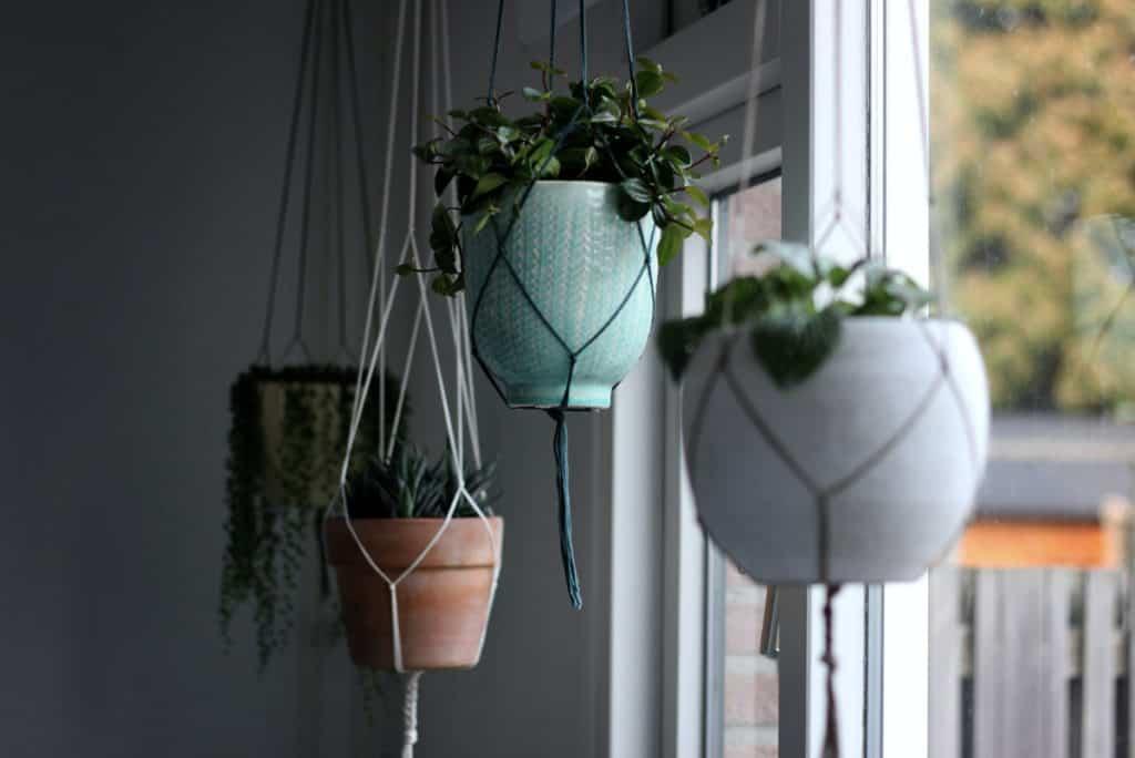 Unsplash_BestIndoorHangingPlantsForLowLight-hangingplants