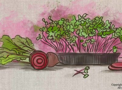 Beet Microgreens Benefits and How To Grow Them