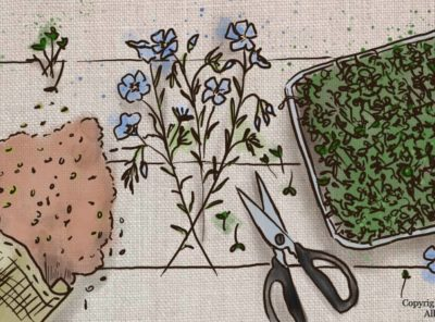 The Benefits of Flax Microgreens and How To Grow Your Own