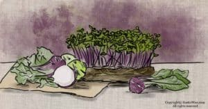 How To Grow Kohlrabi Microgreens and Why You Should