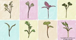 How Much Microgreens To Eat Per Day?