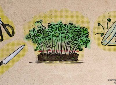 How to Harvest Microgreens: Tips and Strategies for Success