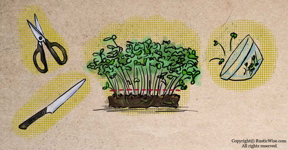 RusticWise_HowToHarvestMicrogreens