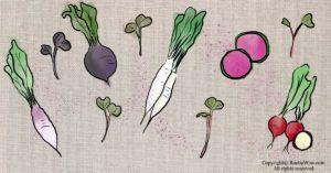 Radish Microgreens Nutrition: Health Benefits, Varieties and How To Grow