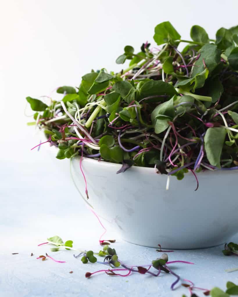 Unsplash_CabbageMicrogreens-microgreensbowl