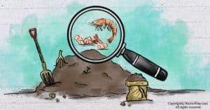 Can You Compost Shrimp Shells? How Shrimp Shells Help Your Garden