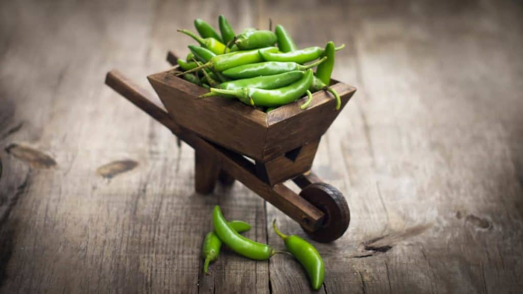 YayImages_CanYouCompostJalapenos_jalapenos-chili-pepper-in-a-miniature-wheelbarrow