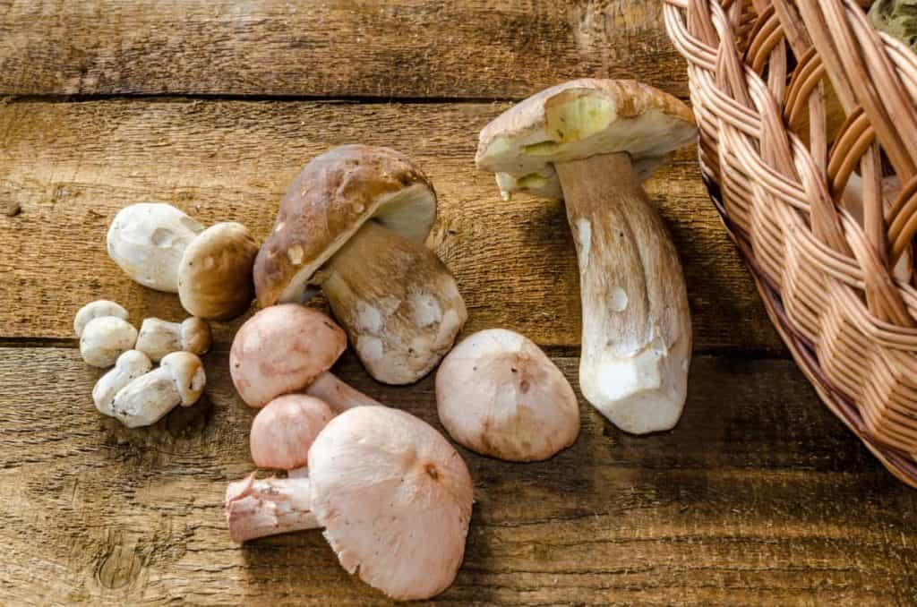 YayImages_CanYouCompostMushrooms_collecting-mushrooms