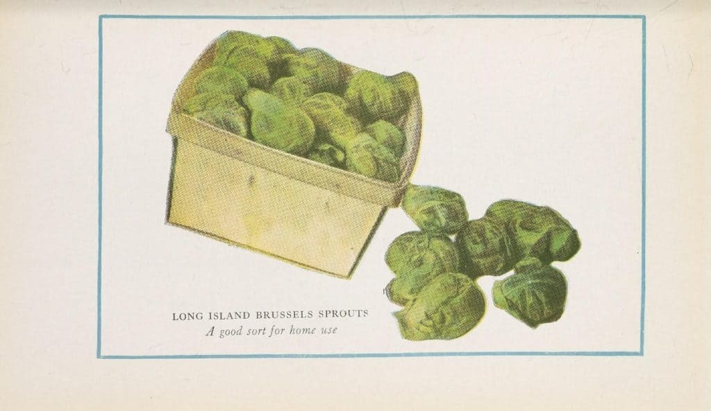 Flickr_HowToGetSeedsFromBrusselSprouts_BrusselsSprouts-BHL