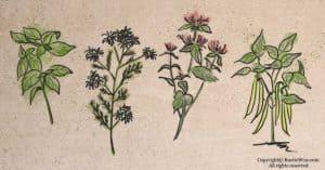 Smart Herb Companion Planting for Gardeners