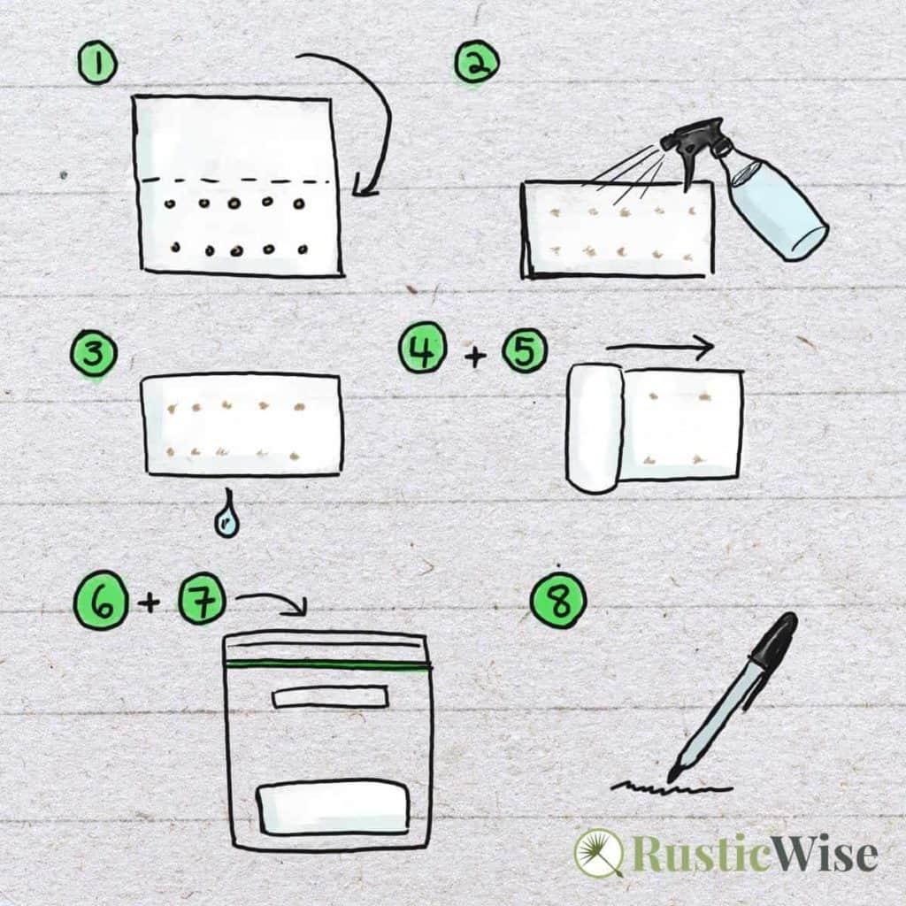RusticWise_HowToGerminateSeedsInPaperTowel-steps.jpg