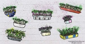 14 Ways to Repurpose Containers for Microgreens