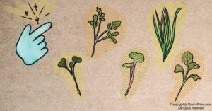 13 Easiest Microgreens To Grow