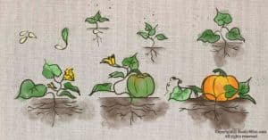 Pumpkin Seed Germination: How To Sprout Pumpkin Seeds and Other Tips