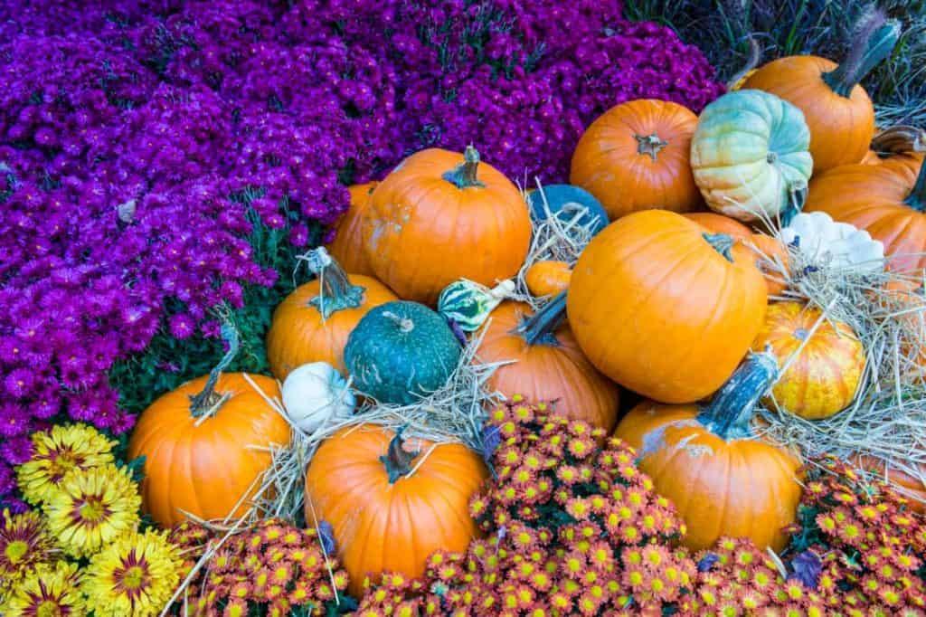 YayImages_PumpkinSeedGermination_pumpkins