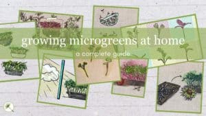 Growing Microgreens at Home: A Complete Guide
